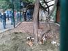 sikaloo_zoo_28